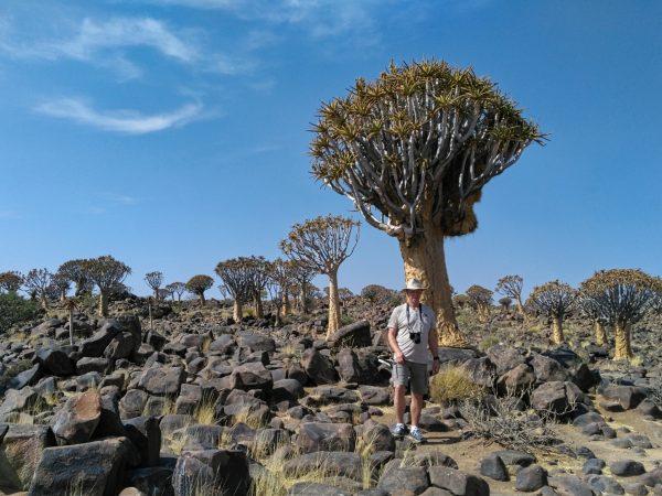 Kalahari - Köcherbaumwald